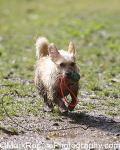 Bizzy in the mud