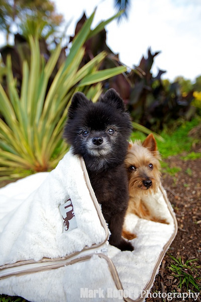 two dogs in sleeping bag