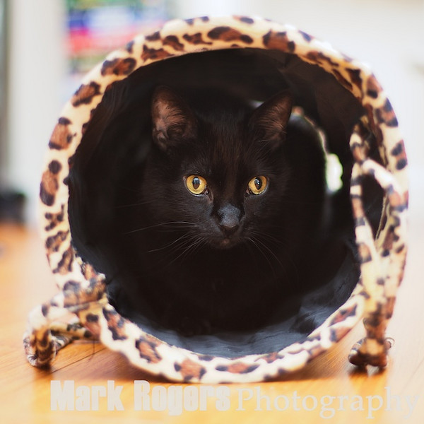 Cat in toy tunnel