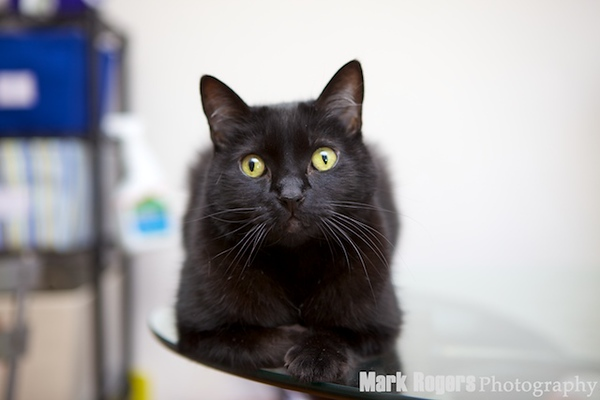 black cat on glass table